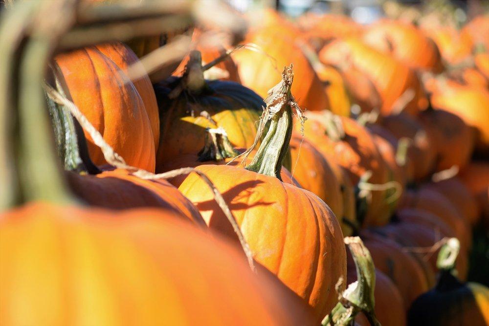 pumpkin-2828519_1920.jpg