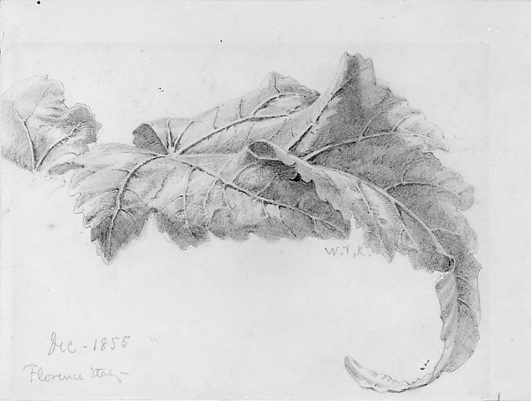 Leaves by William Trost Richards   You see the veins and almost desire to reach out to feel how rough the dry leaves have become. There is beauty and talent in portraying something as close to what you see as possible.