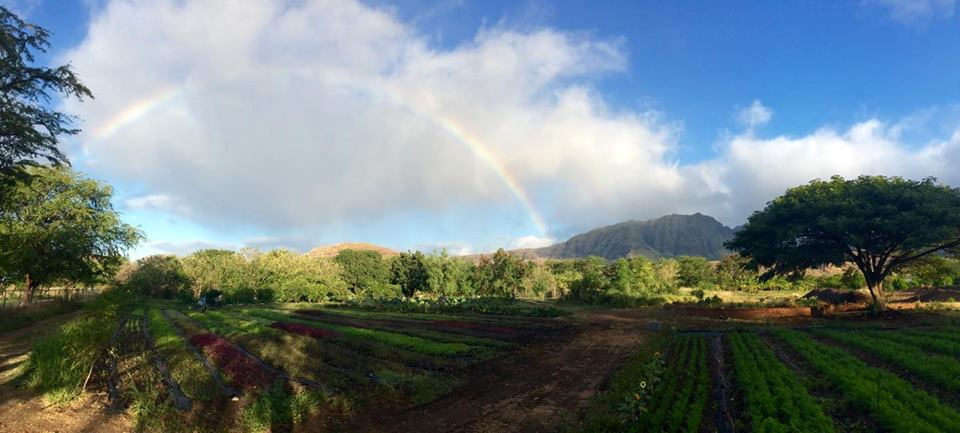 Kahumana Organic Farms A rainbow over the organic vegetable beds of Kahumana Organic Farm & Cafe are always a welcomed sign of good things coming. Imagine waking up to this! One of Oʻahu's largest certified organic farms, education & retreat center with vocational training for families people with disabilities, and youth. Founded through reconnecting with land with farming as key stepping stone towards leading a more healthy, productive and balanced life. - regenerative enterprise