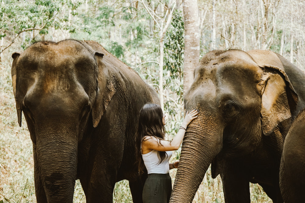 Caring for Elephants