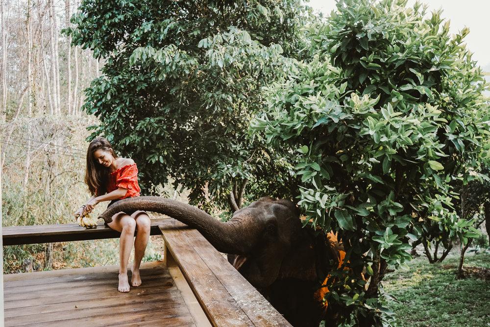 Feeding Elephant on Patio
