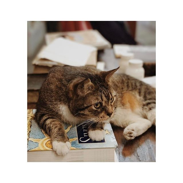 Our helpful guide in Beckham's Books 😻😻 . . . #cat #books #bookstore