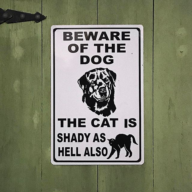 """""""The cat is shady as hell also"""" . . . #dog #cat #sign #bewareofdog #nola"""