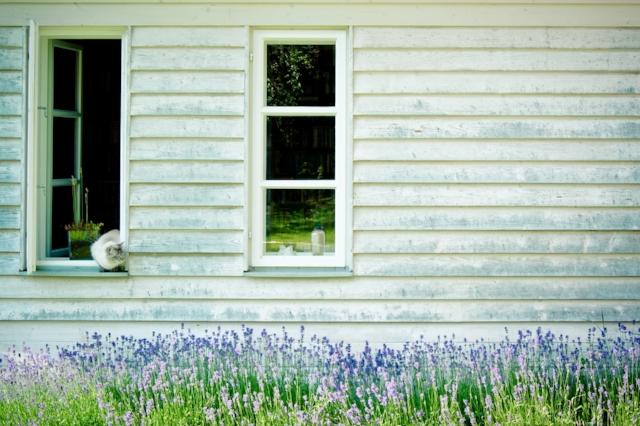 timber-facade-1169306_1280.jpg