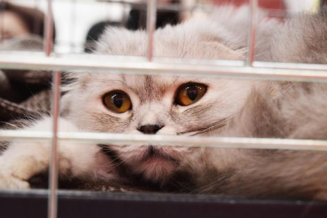 shelter-cat-2754333_1280.jpg