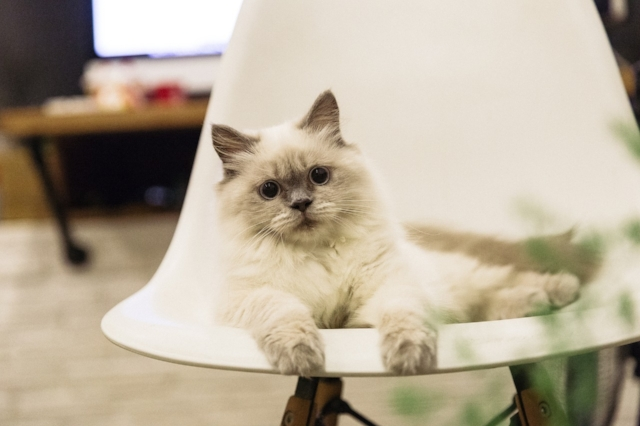 cat-2224201_1280.jpg