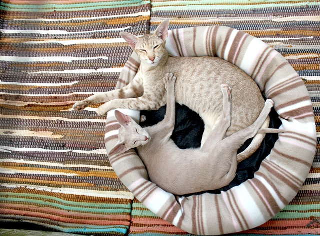 cat-202071_640.jpg
