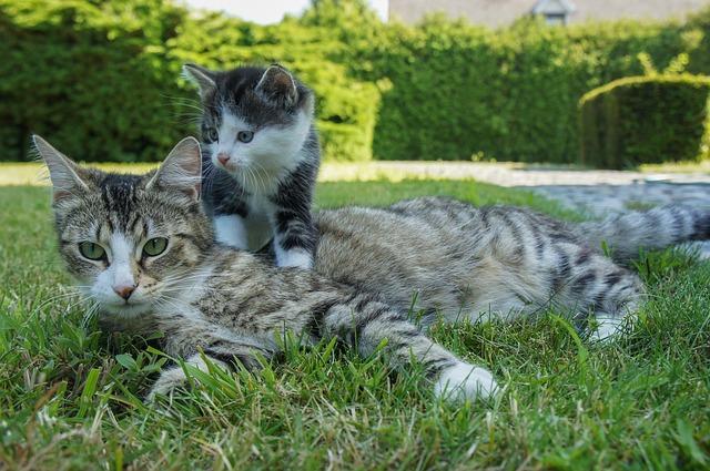 cat-2553079_640.jpg