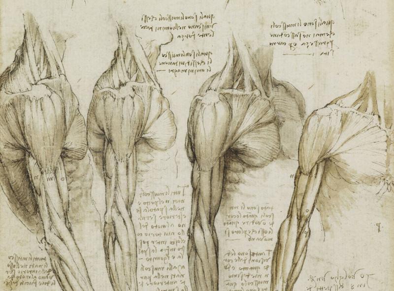 Davincis drawing of human anatomy