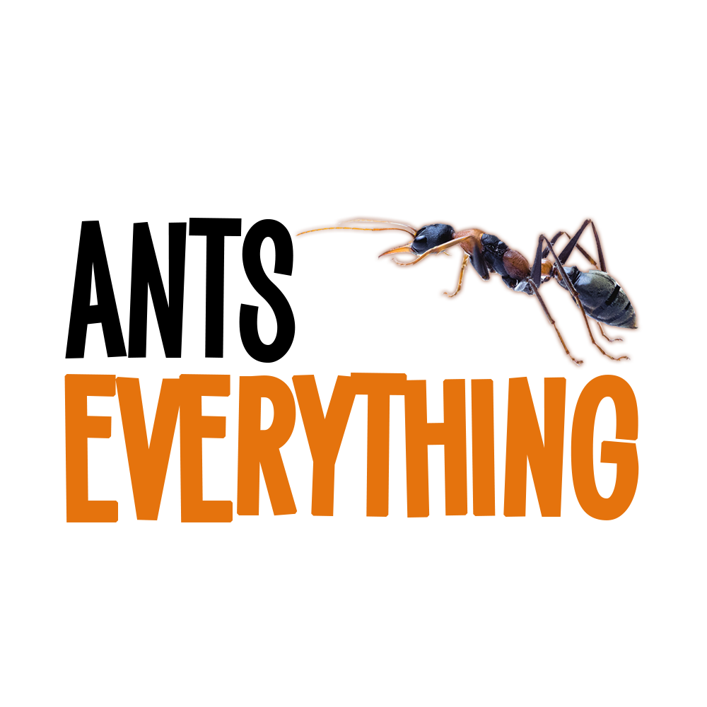 Ants Everything