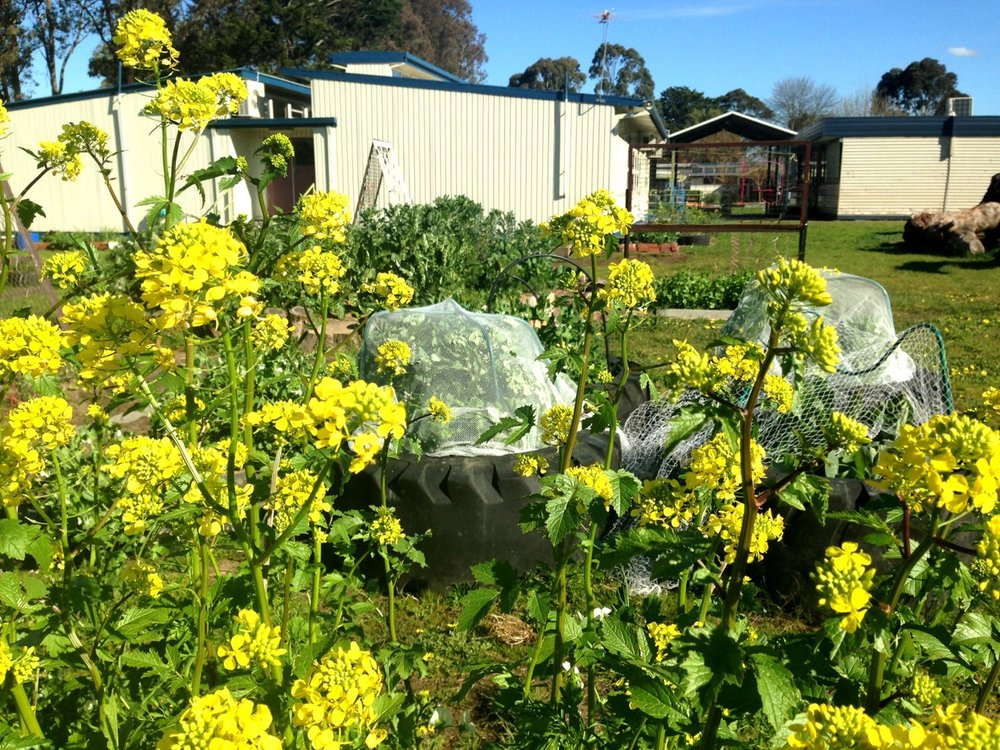 school_garden_design_melbourne.jpg