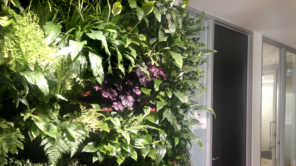 office_planting_melbourne.jpg