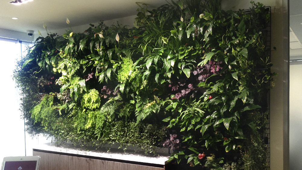 office_vertical_wall_gardens_melbourne.jpg