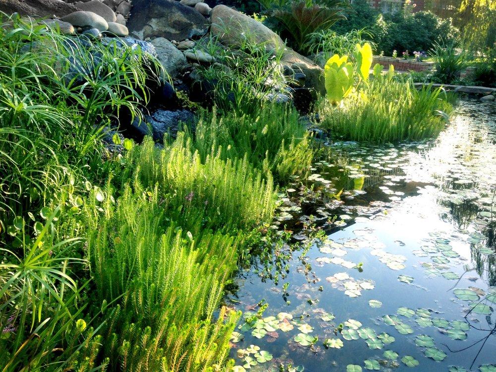 melbourne_ponds.jpg