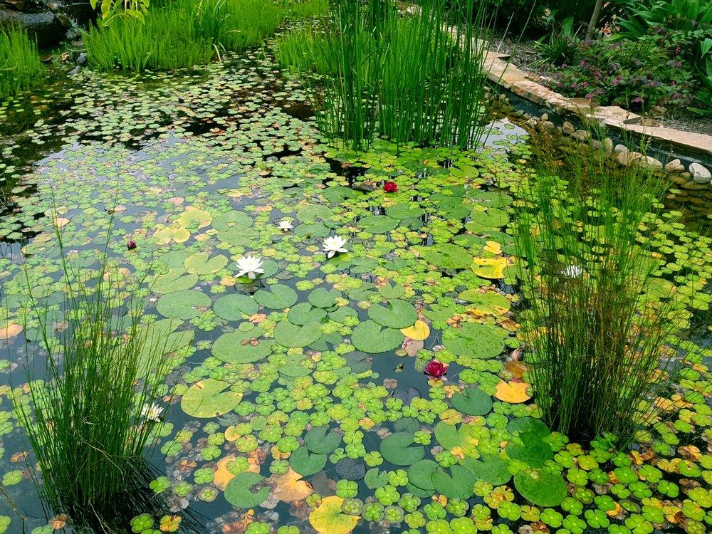 frog_pond_melbourne.jpg