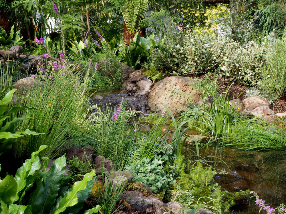 Pond_design_melbourne.jpg