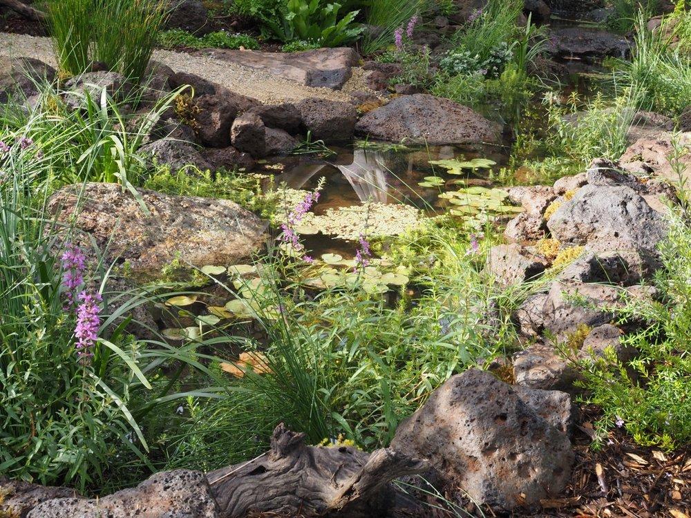 Pondscape.jpg