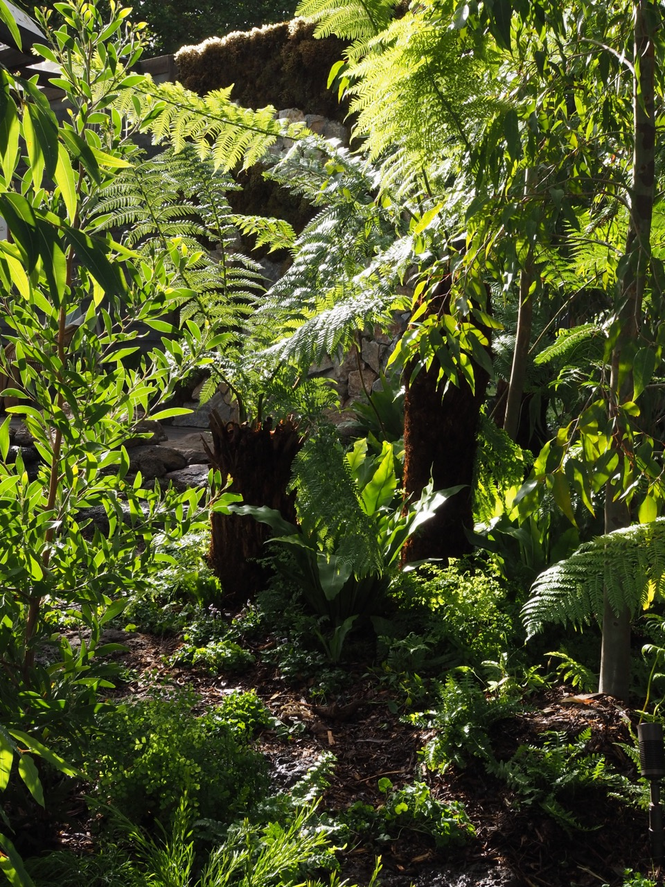 tree_ferns_melbourne.jpg