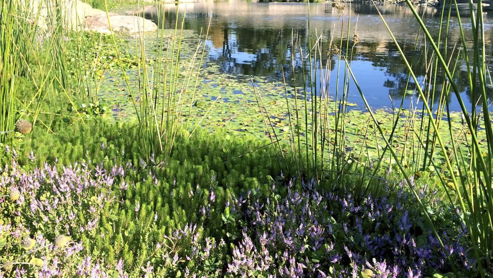 stem_landscape_architecture_and_design_wetland.jpg