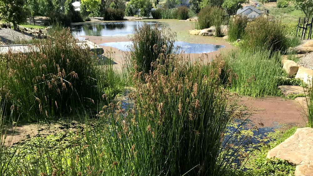 stem_landscape_design_water_habitats.jpg