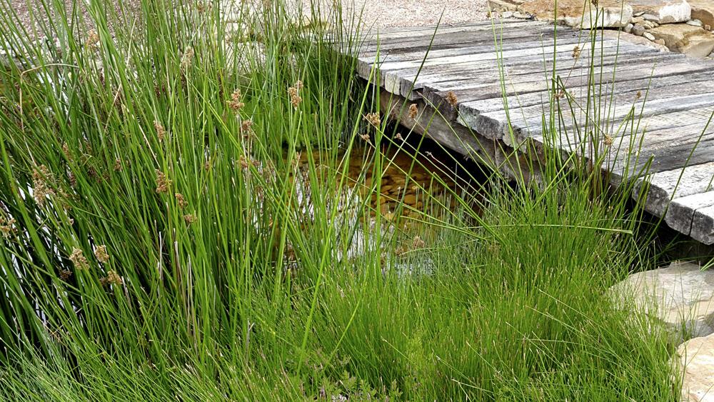 stem_landscape_architecture_wetlands_.jpg