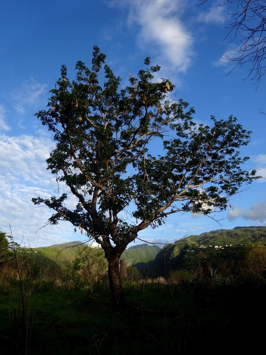 Rivière des Galets, Île de la Réunion