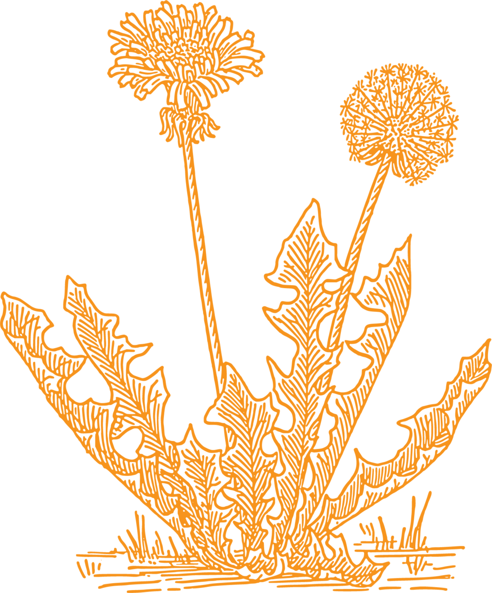 Dandelion artists logo
