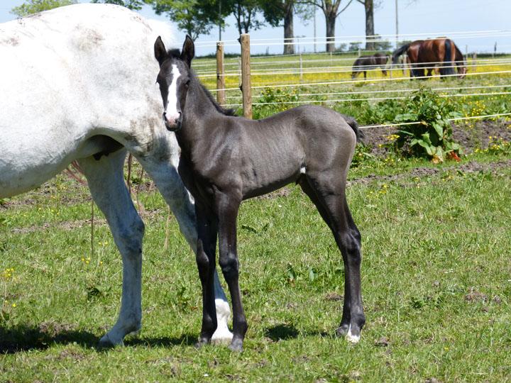 alegra_Meine-Spanischen_Pferde074.jpg