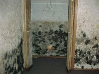 Black Mold Growing on walls