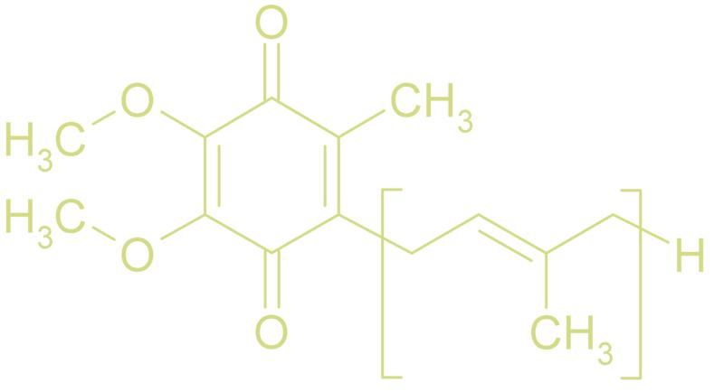 Coenzyme-Q10-antioxidant.jpg