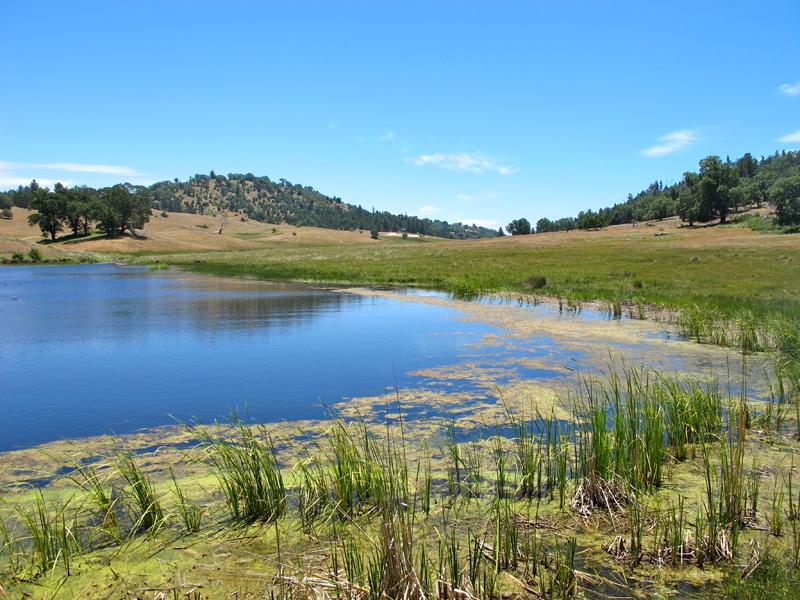 mendenhall-lake
