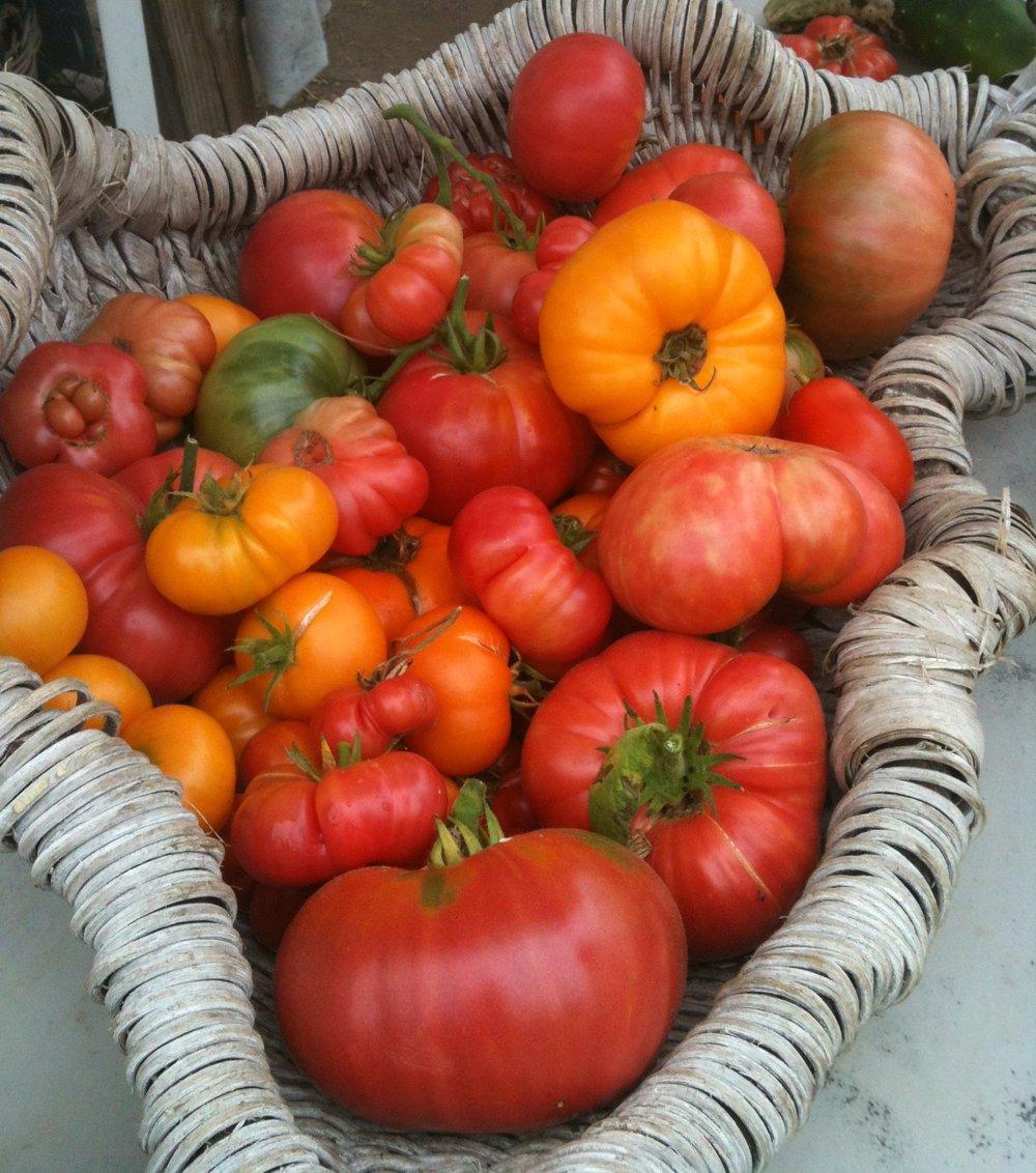 tomatos-e1344282402894.jpg