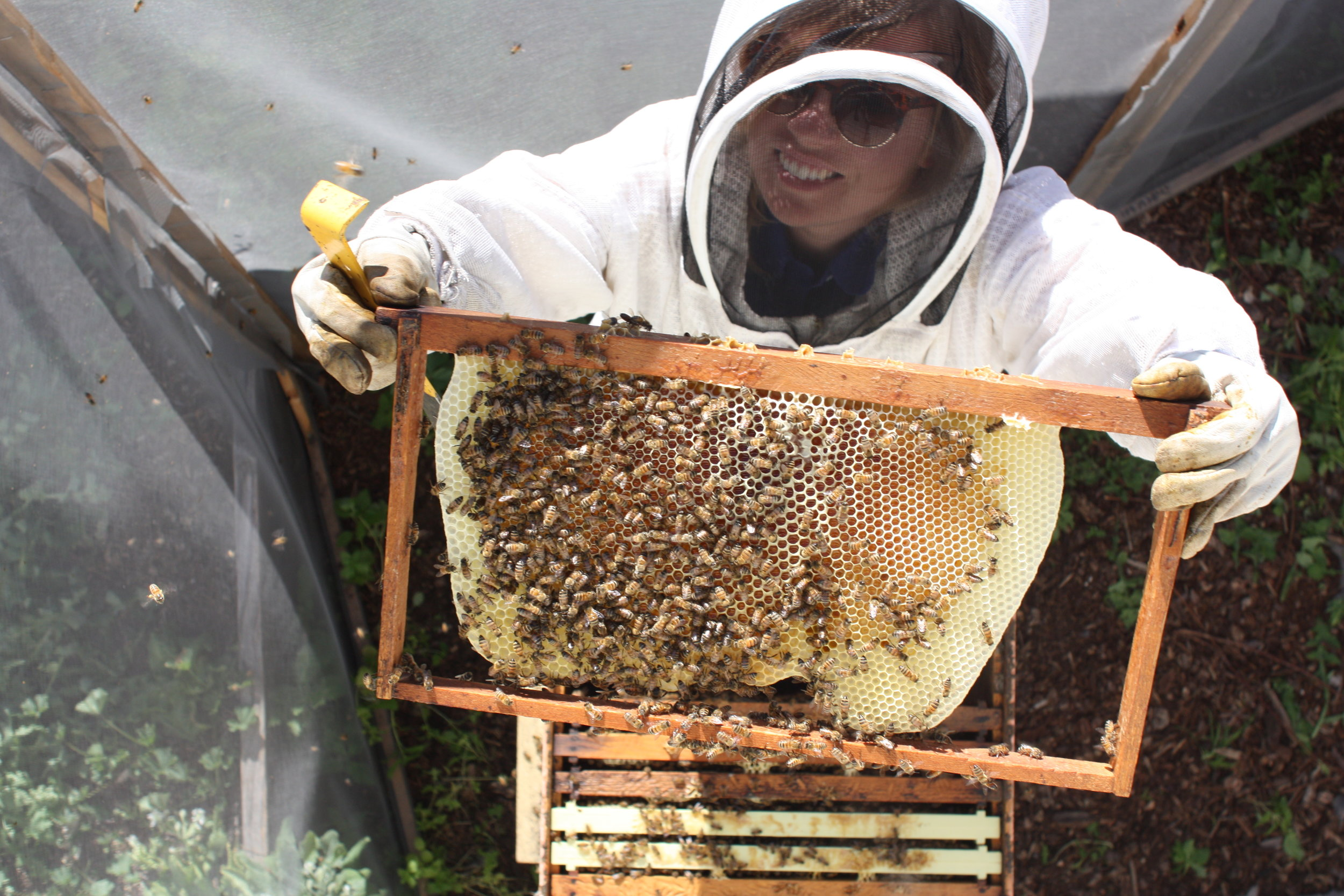 Hillary tending her bees.