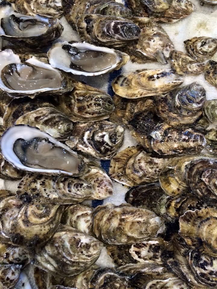 Baja Kumiai oysters. Photo: S. Shoffler