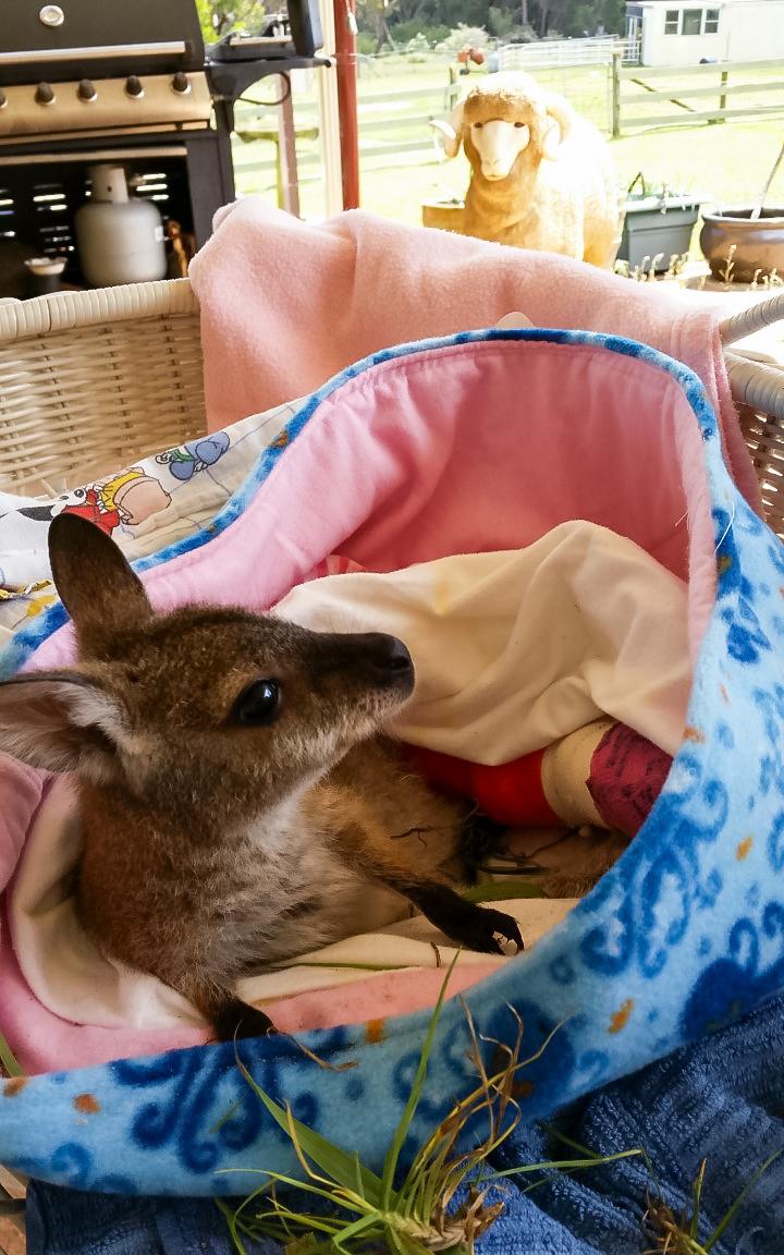 Marsupials -