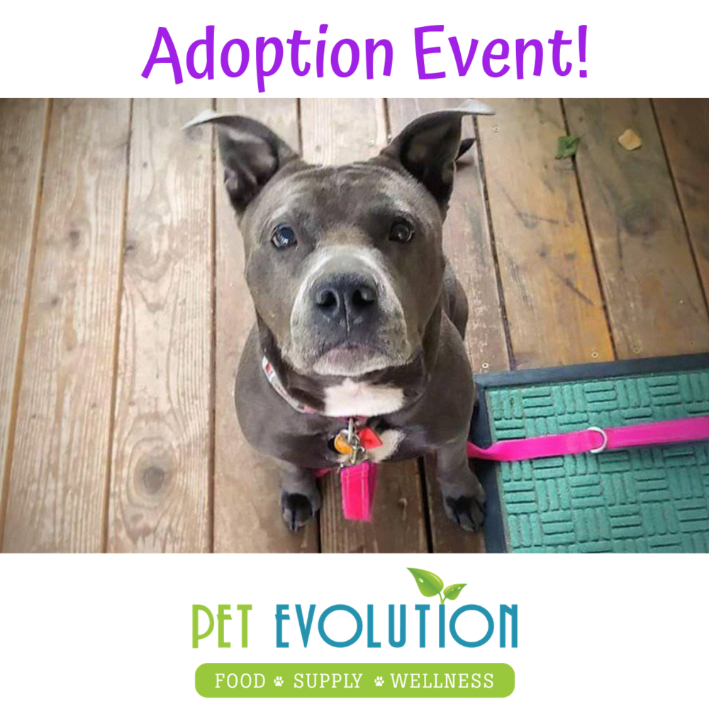 Adoption Event!.png