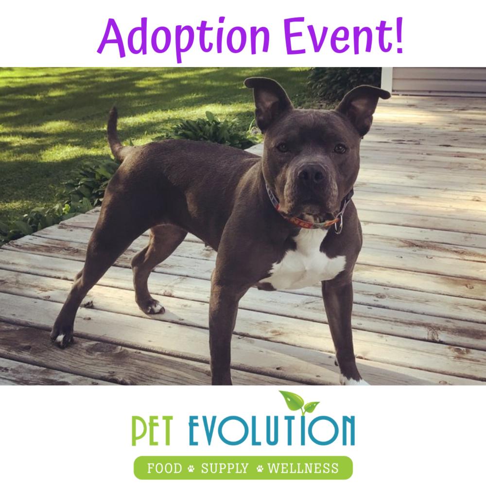 Adoption Event! (1).png