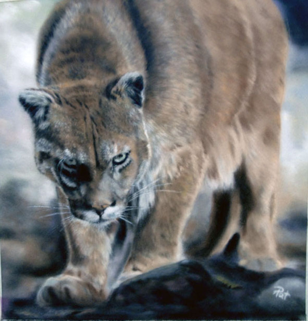 Cougar, pastel on velour  © Pawzitiveart