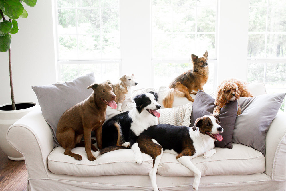 Dogs and Decor 13.jpg