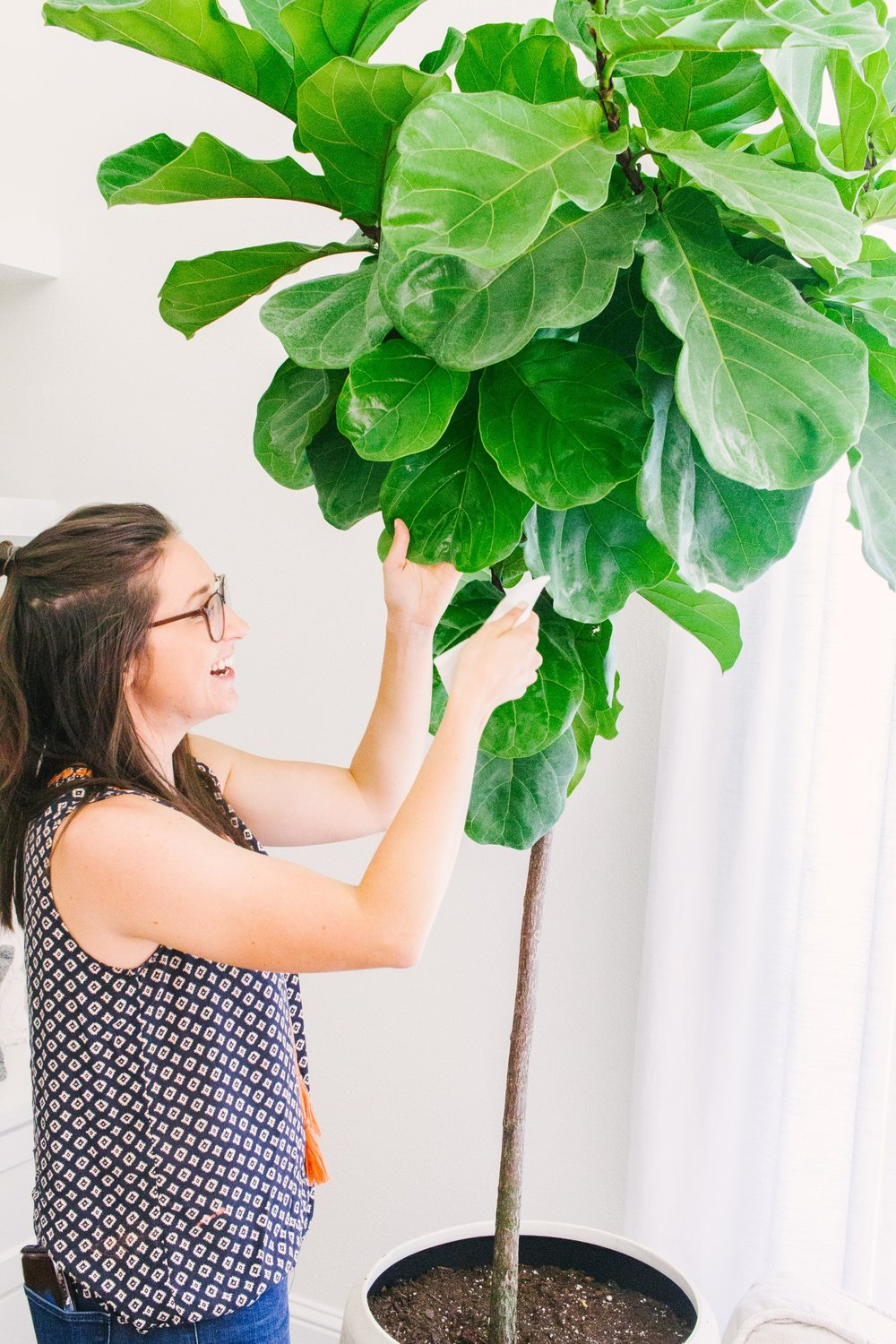 Our House Plants - Our House Plants - Fiddle Leaf Fig Care Tips
