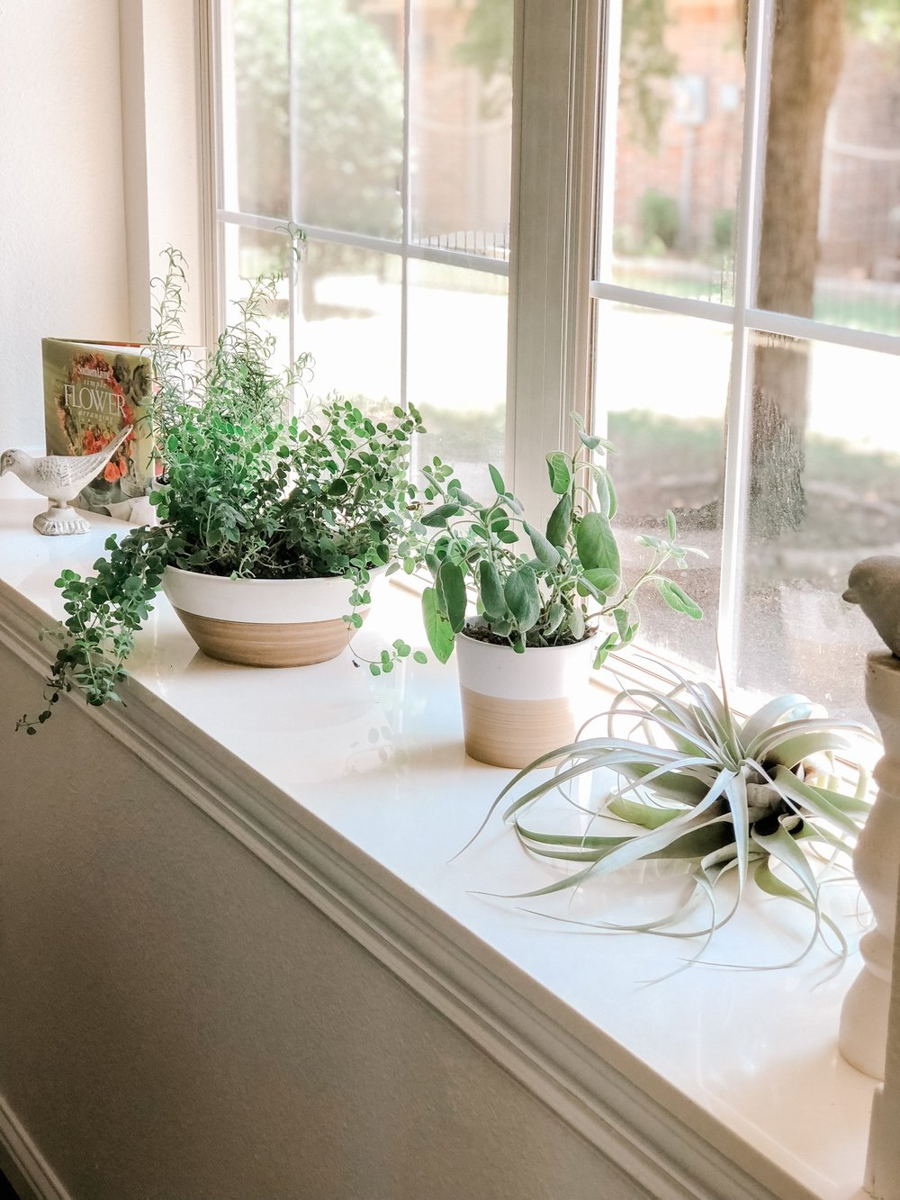 Our House Plants - Herb Care Tips