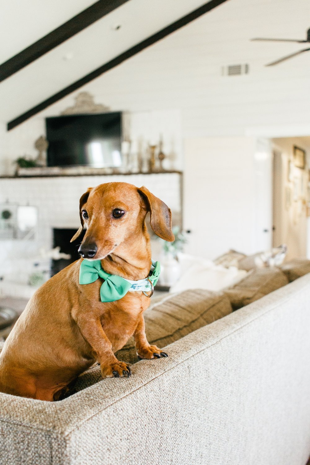 My Little White Barn Home Tour  - Spring Decor Inspiration - Dogs