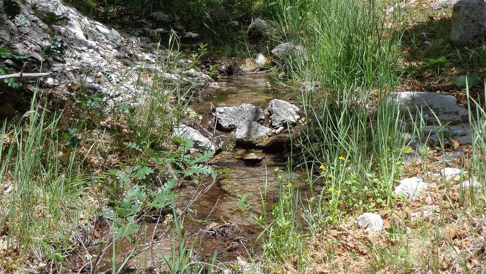 hc-water-from-secret-spring-medium.jpg