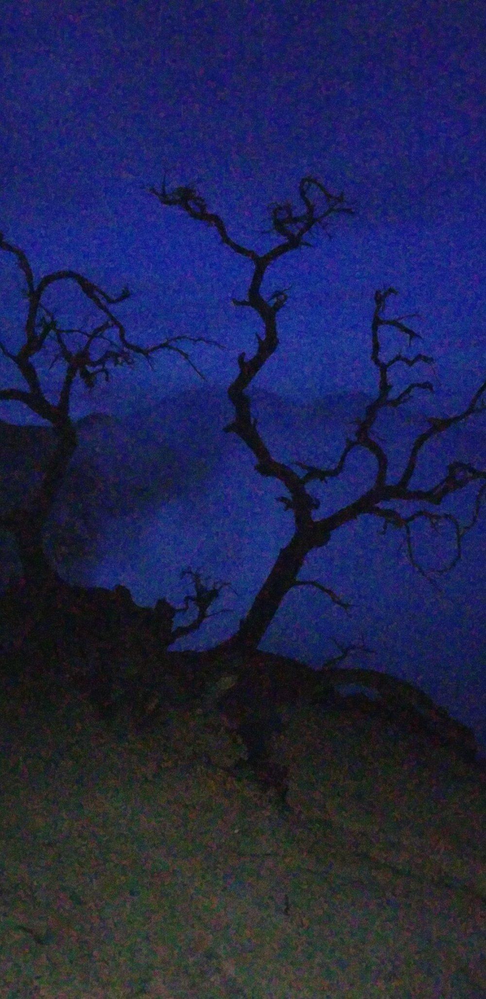 Trees on Mt. Ijen as Day Breaks