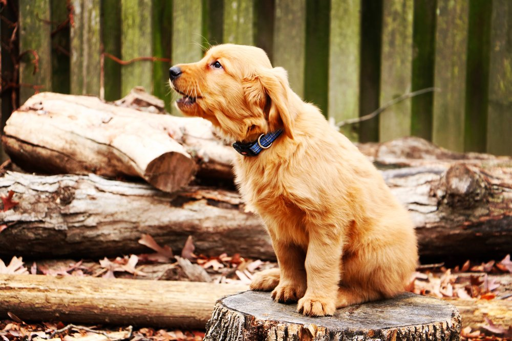 You can tackle nuisance barking quickly and easily with consistent interventions