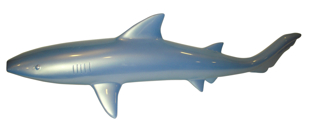 Requin_bleu2_1.png