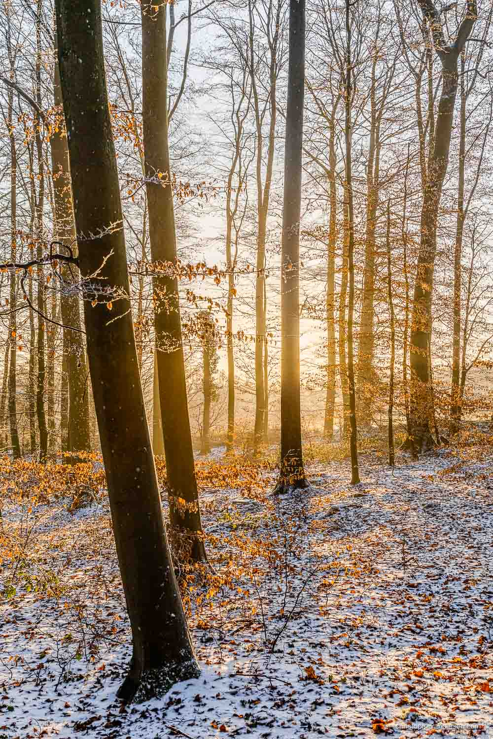 Snow in Luxembourg - Winter sunset in a forest somewhere in the Grand-Duchy of Snow in Luxembourg - Winter Light