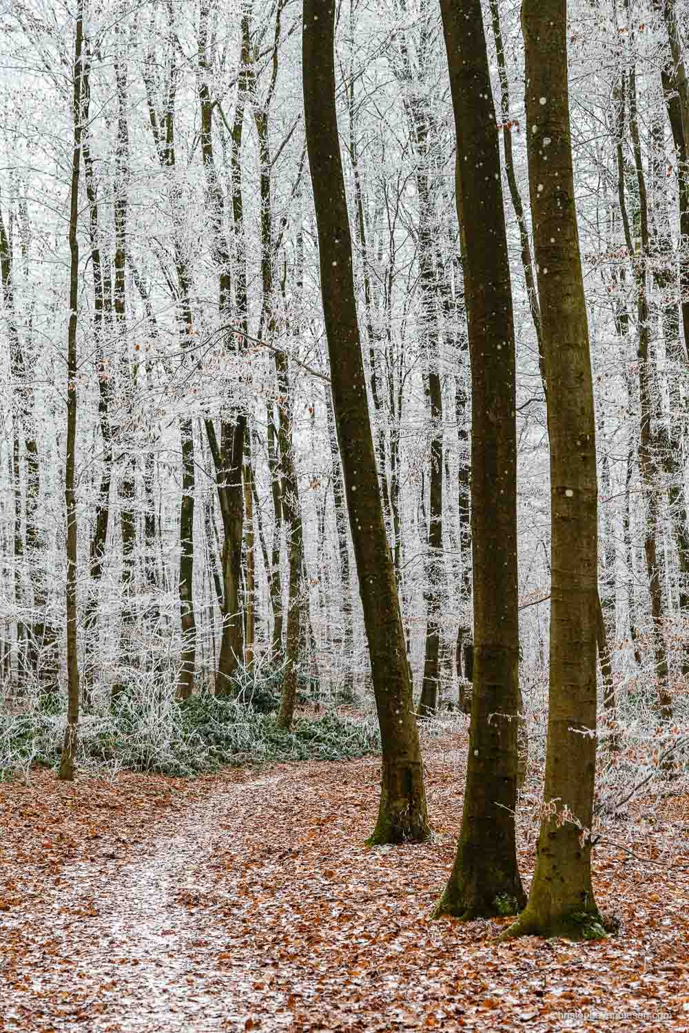 Snow in Luxembourg - Freezing winter in a forest somewhere in the Grand-Duchy of Snow in Luxembourg - Deep into the Frozen Forest