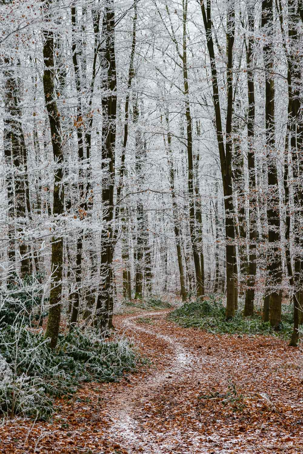 Snow in Luxembourg - Freezing winter in a forest somewhere in the Grand-Duchy of Snow in Luxembourg - Winter Wanderlust