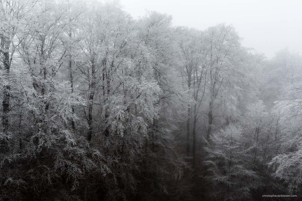 Snow in Luxembourg - Freezing winter in a forest somewhere in the Grand-Duchy of Snow in Luxembourg - Frost Giants